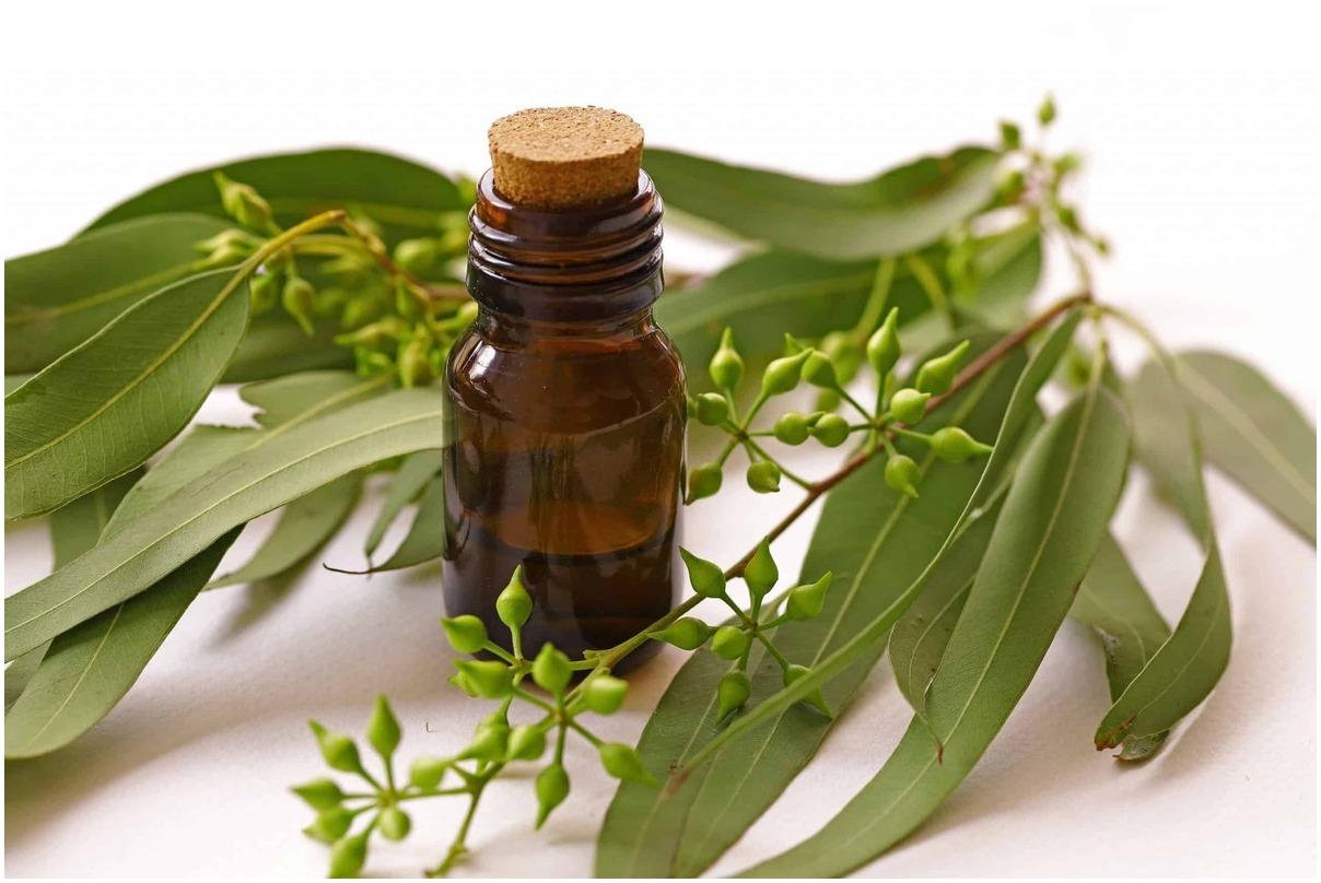 huile-d-eucalyptus