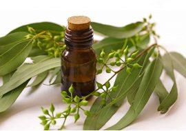 6 avantages pour la santé de l'huile d'eucalyptus
